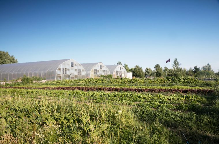 Fresh-City-Farm-Downsview